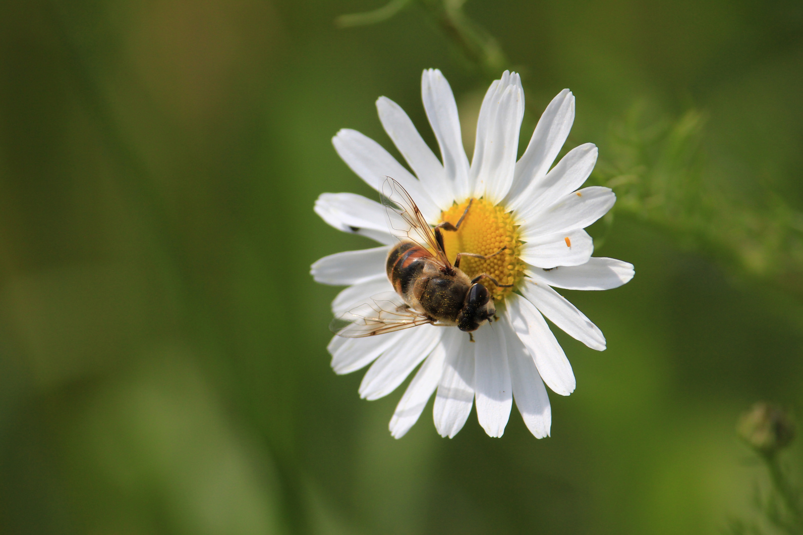 Blume mit Fliege