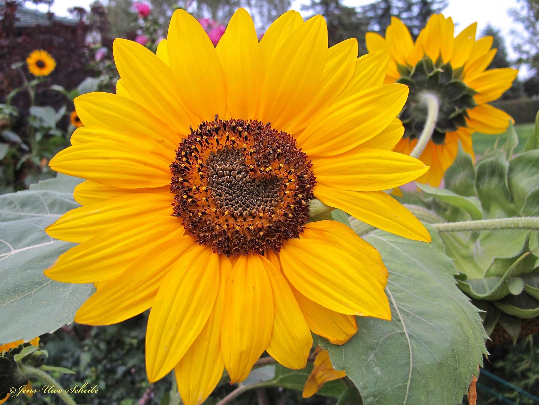 Blume mit Herz...
