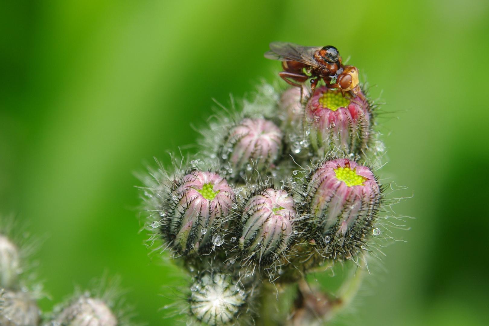 Blume mit Insekt