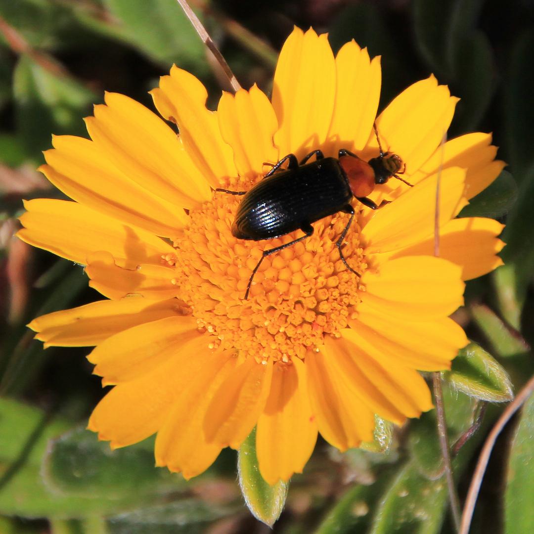 Blume mit Insekte