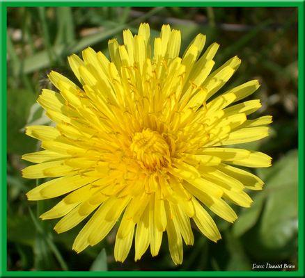 Blume mit Rahmen