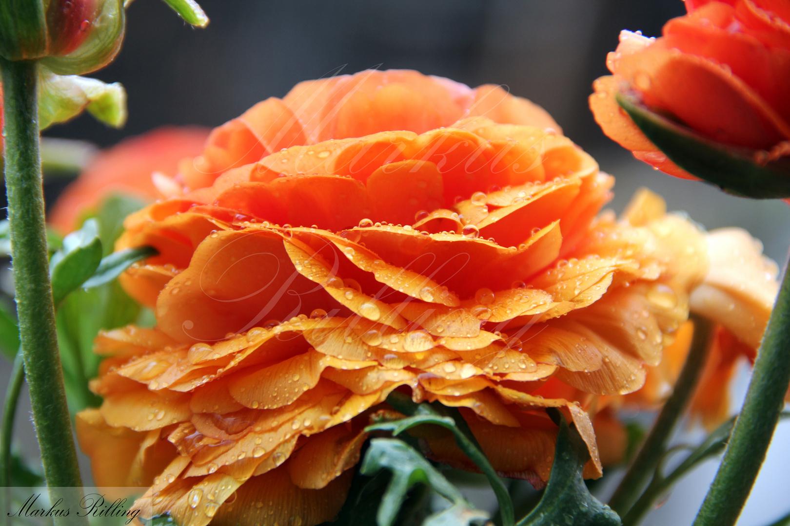 Blume mit Regentropfen