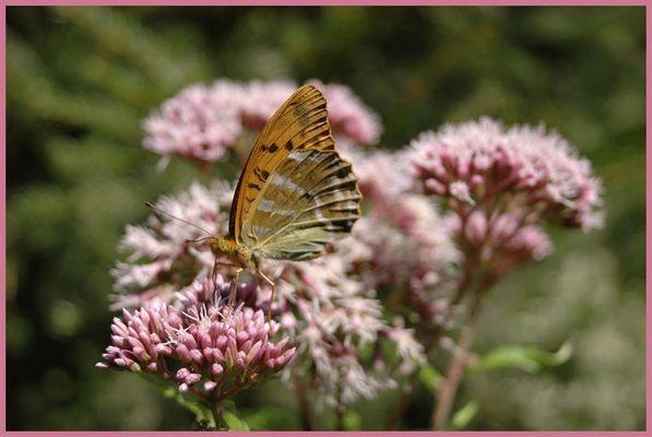 Blume mit Schmetterling