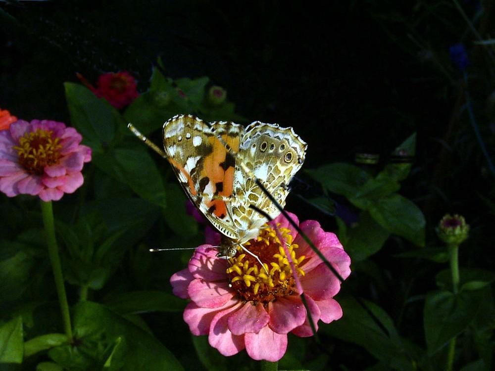 Blume mit Schmetterling (Name?)