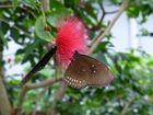 Blume mit Schmetterlinge