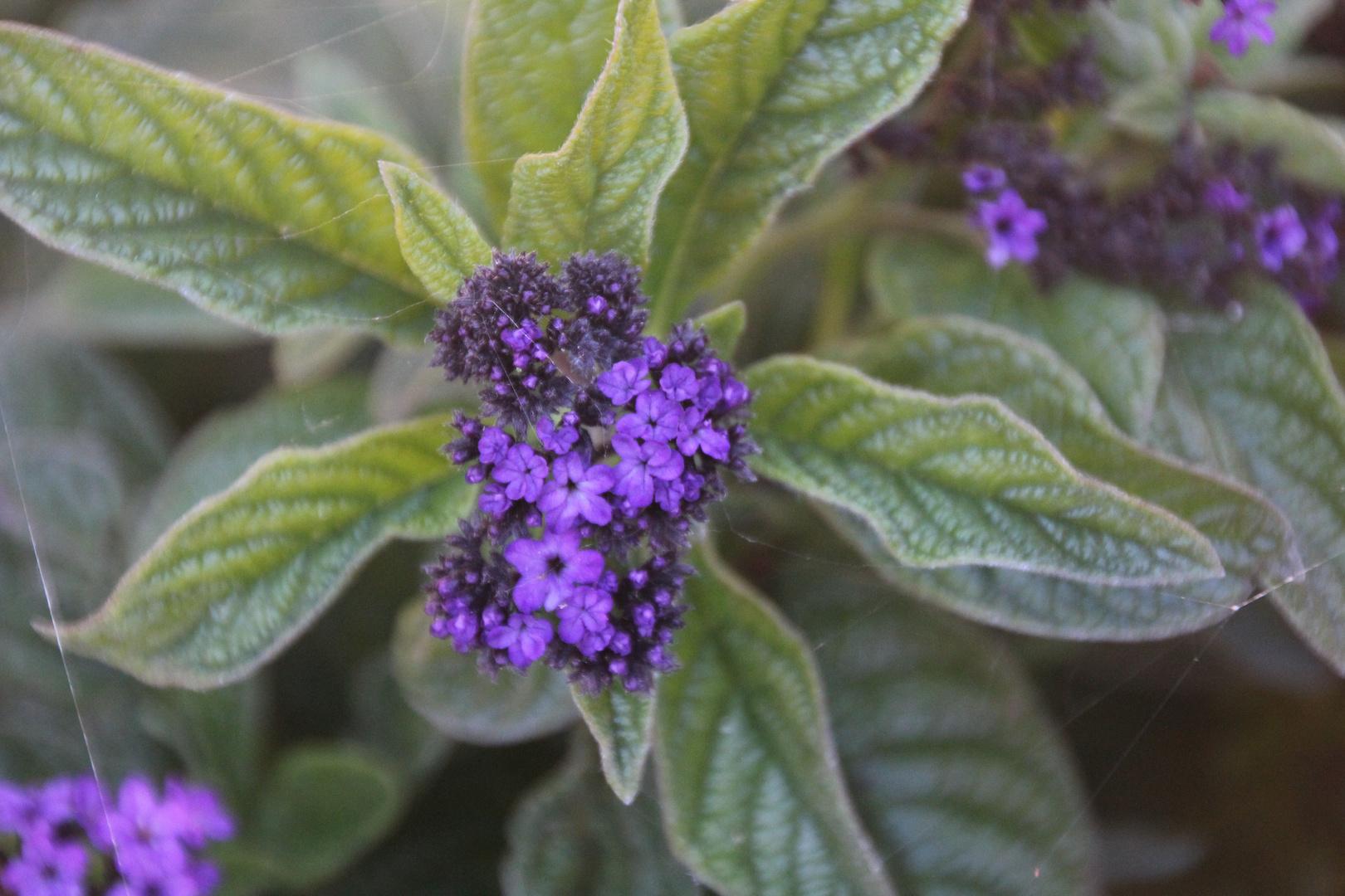 Blume mit Spinnennetz