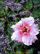Blume mit Tautropfen