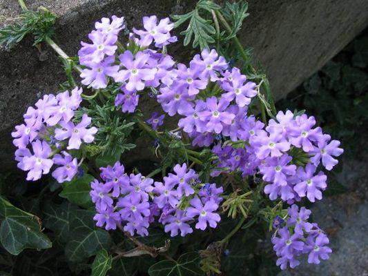 Blume neben der Autobahn