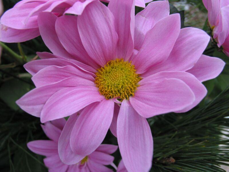Blume No.9