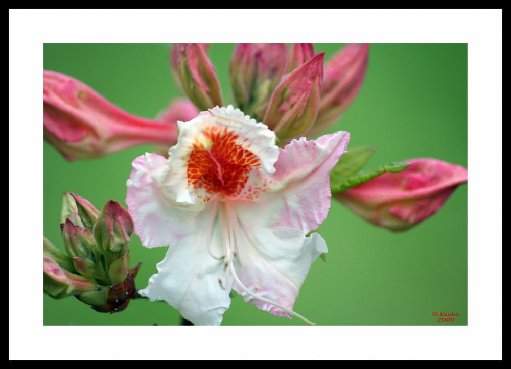 Blume Nr.2