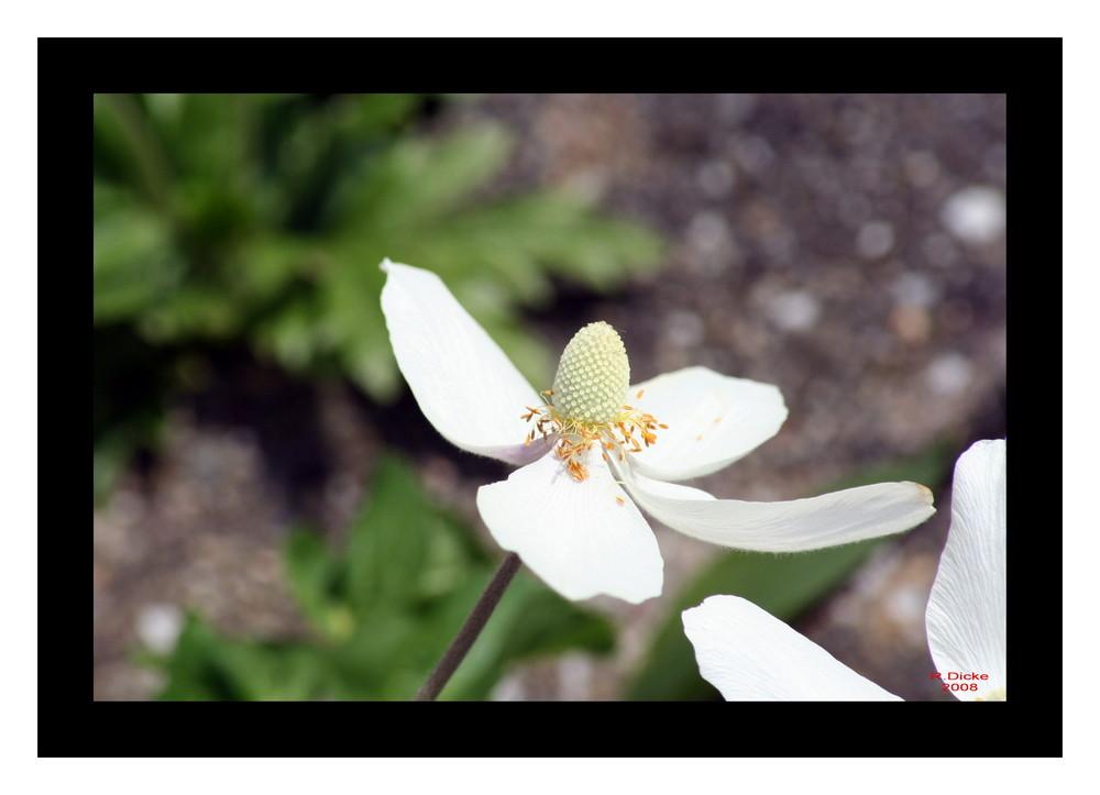 Blume Nr.3