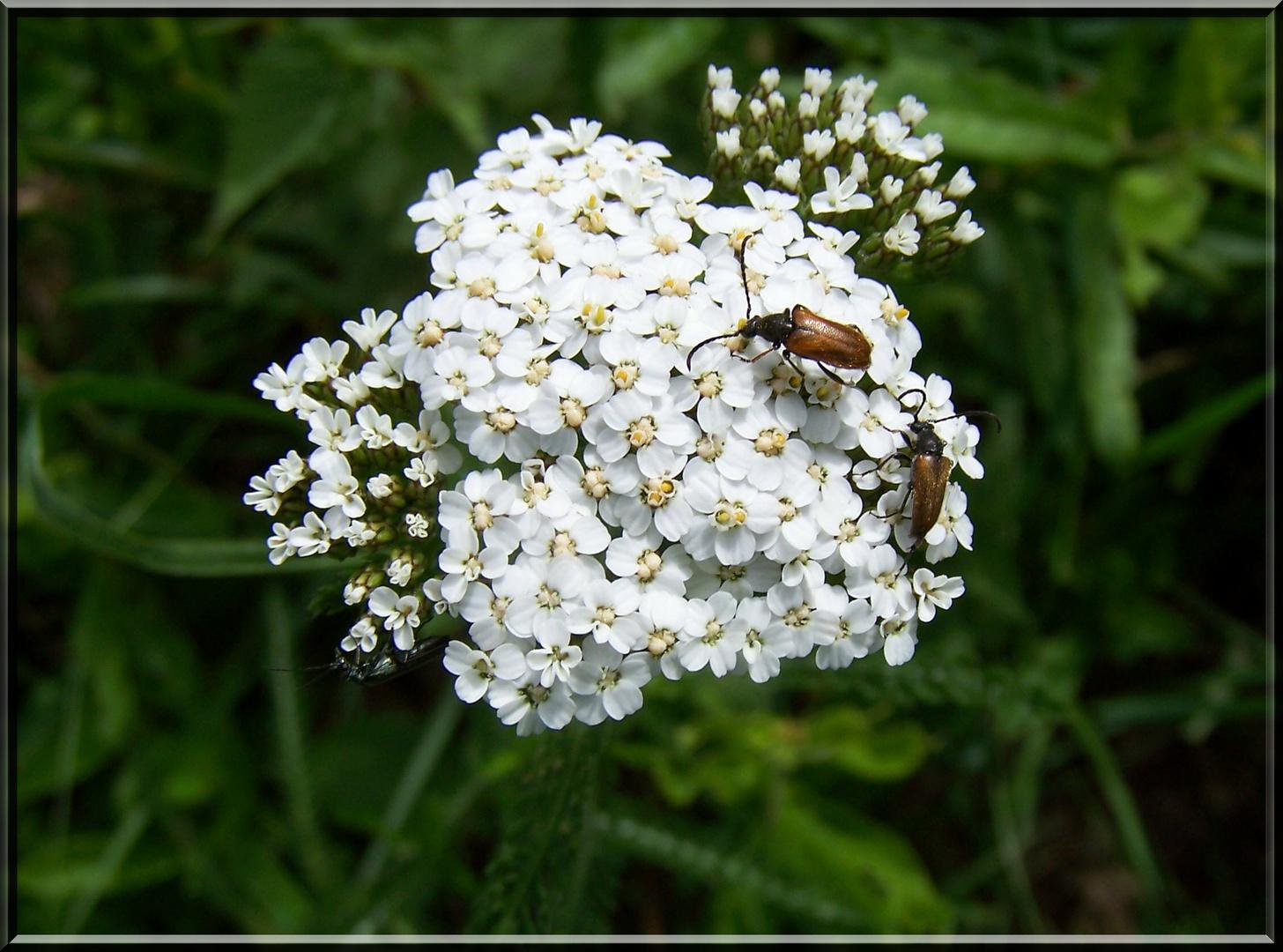 Blume (Nr.5)