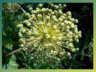 Blume (Nr.7)