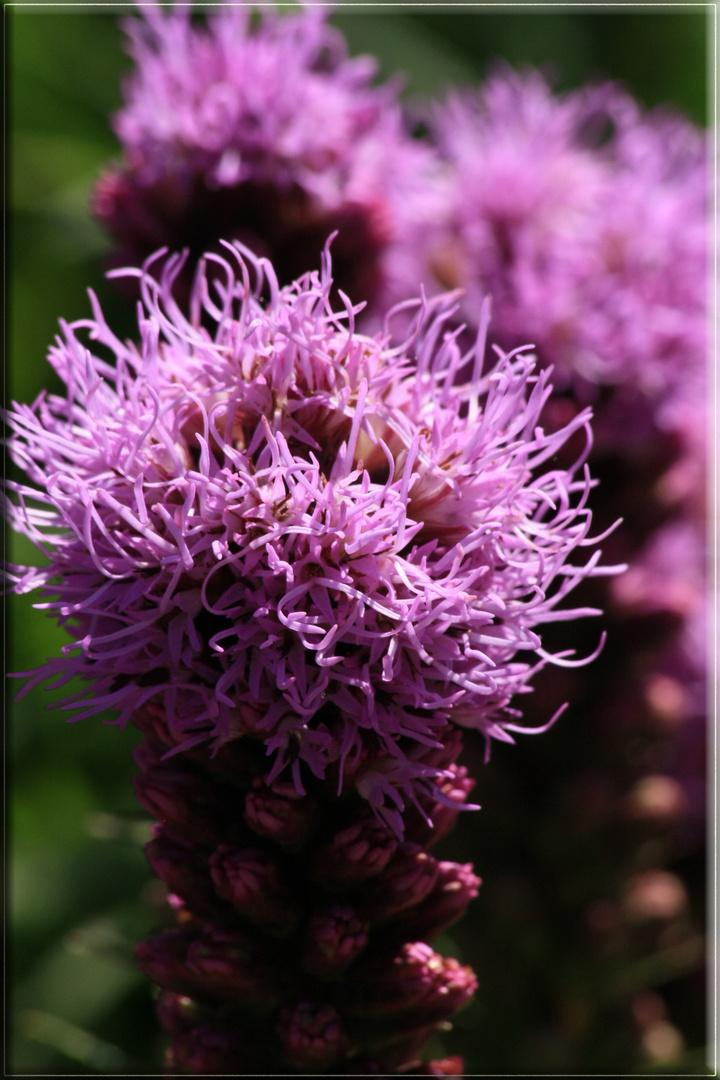 Blume (Nr.9)
