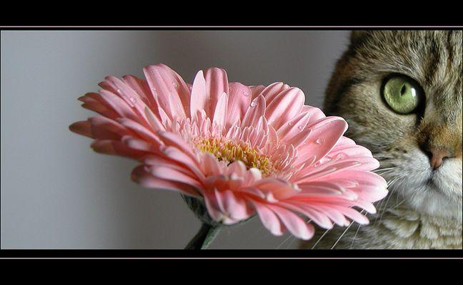 Blume oder Katze?