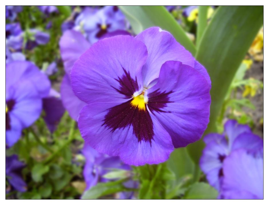Blume oder Schmetterling