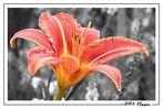 Blume *reload*