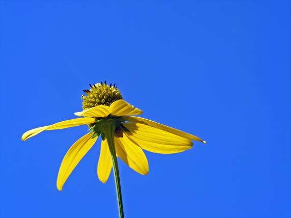 Blume streckt sich zum Himmel