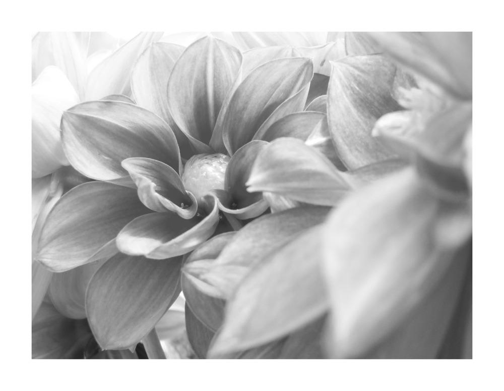 Blume sw