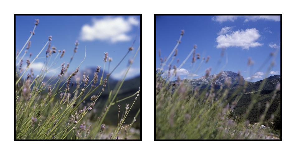 Blume und Gebirge
