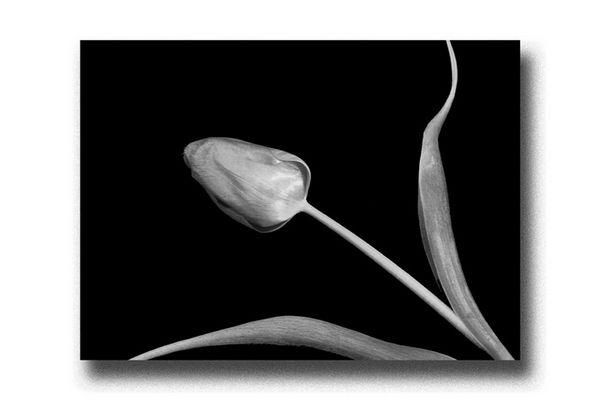 Blume und Kunst