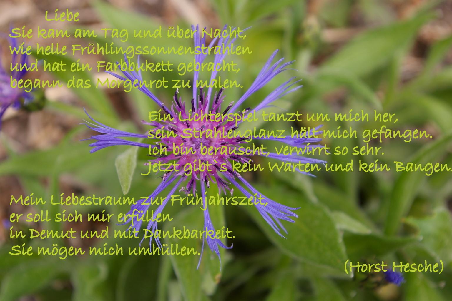 Blume und Spruch (3)