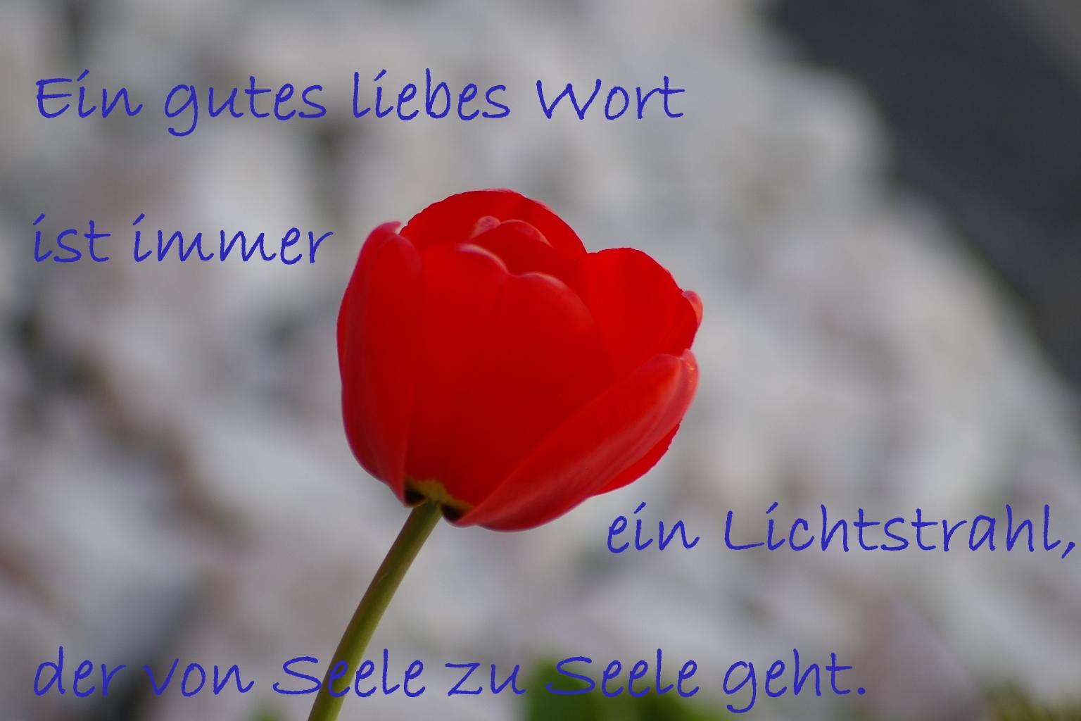Blume und Spruch (6)
