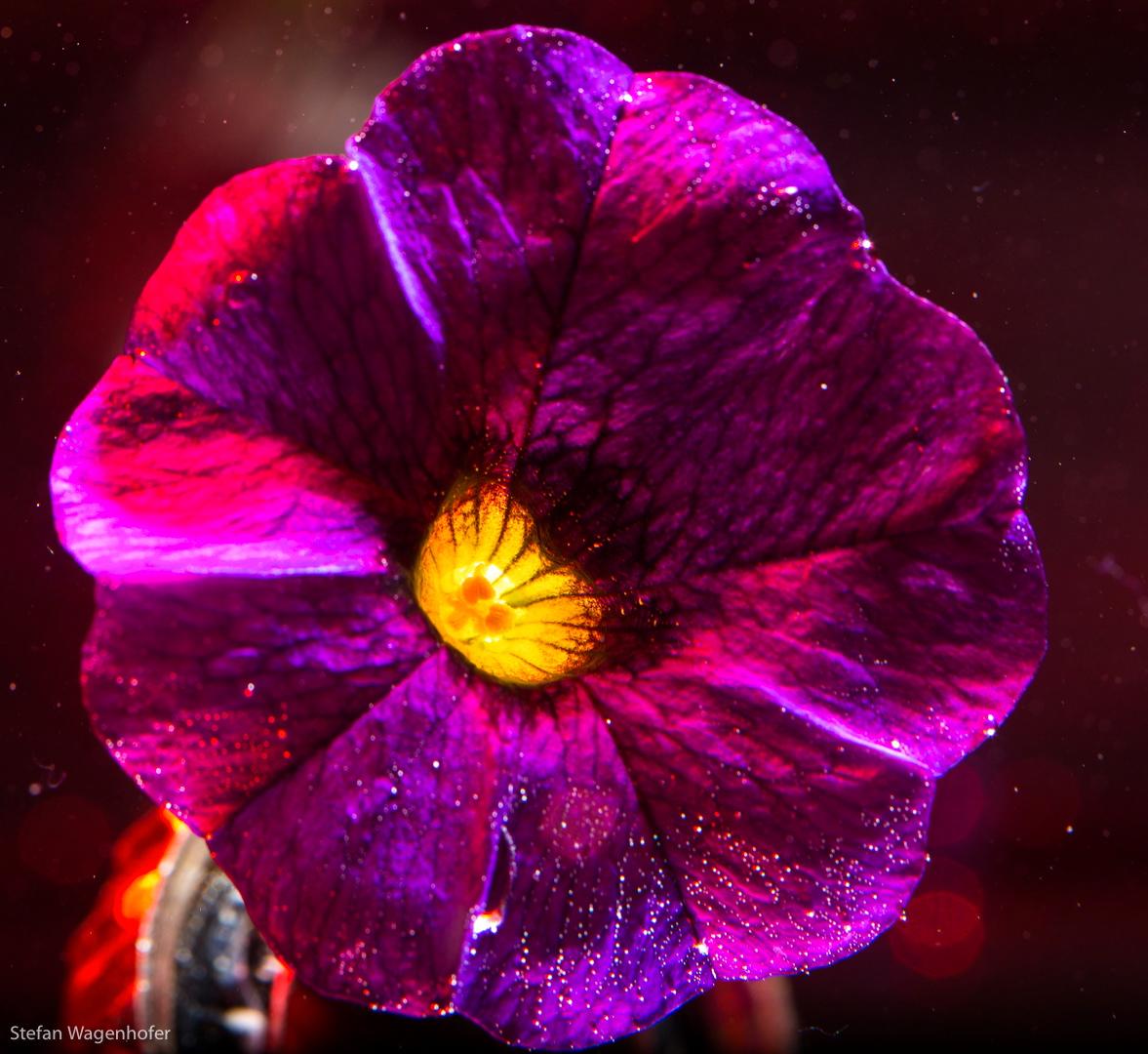 Blume Underwasser