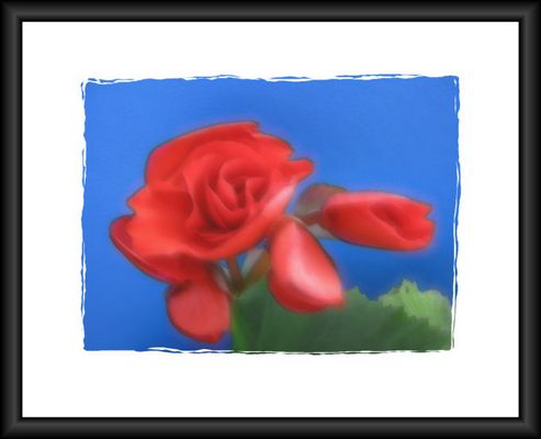 "Blume ""vernebelt"""