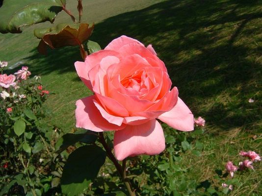 Blume von Garda