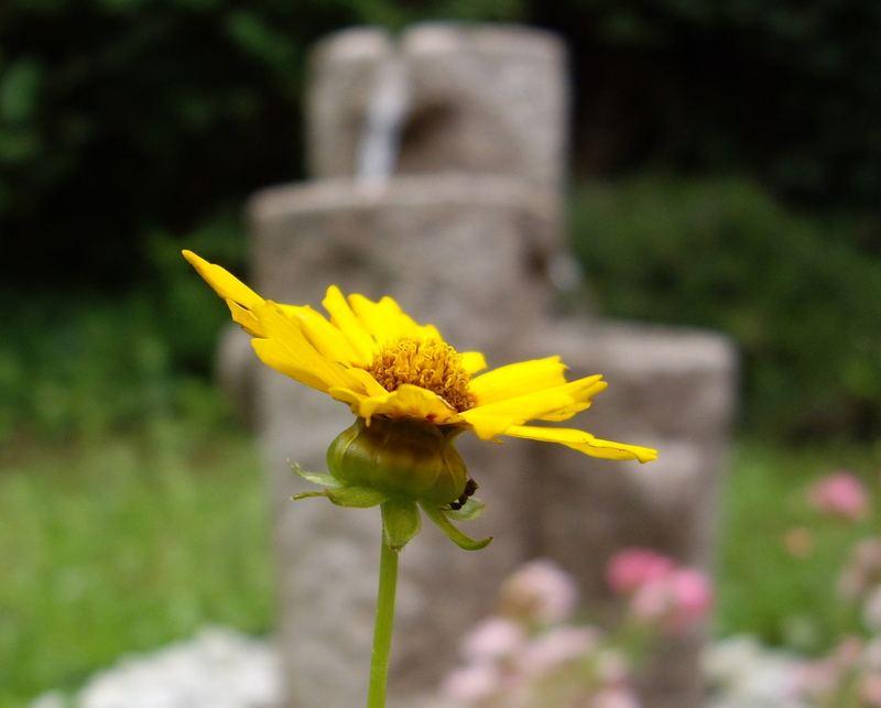 Blume vor Brunnen