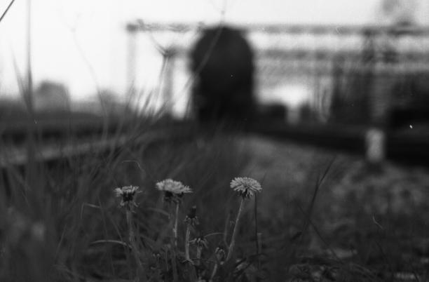 Blume vor Güterwagon