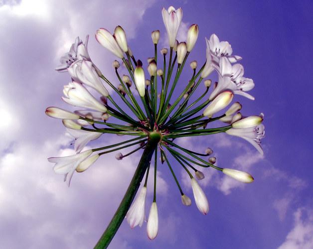 Blume vor Himmel