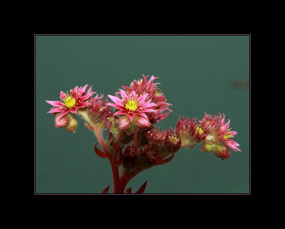 Blume vor Wasser
