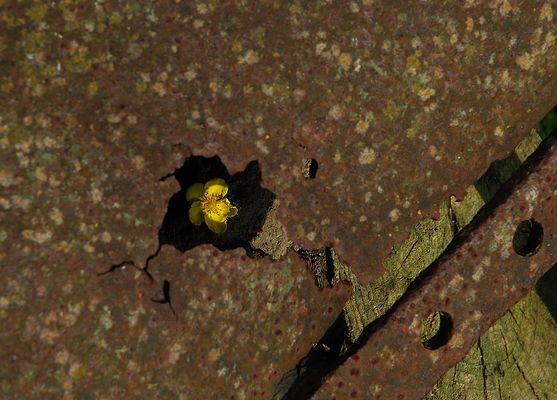 Blume vs Schrott