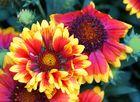 ..Blume zum Wochenende..