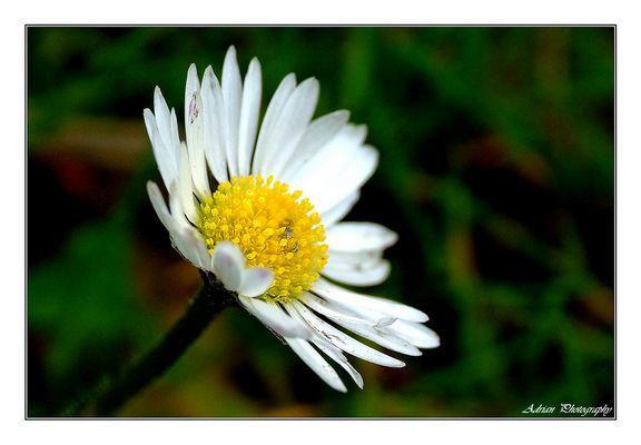Blume_01