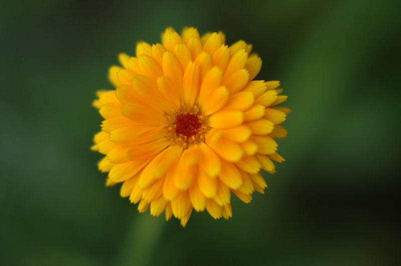 Blume01