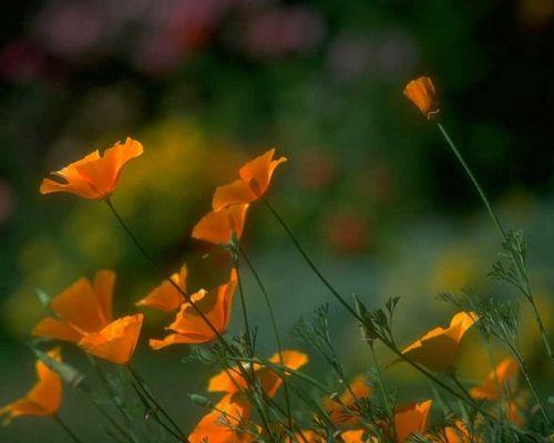 Blume07