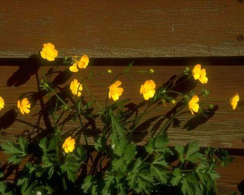Blume08