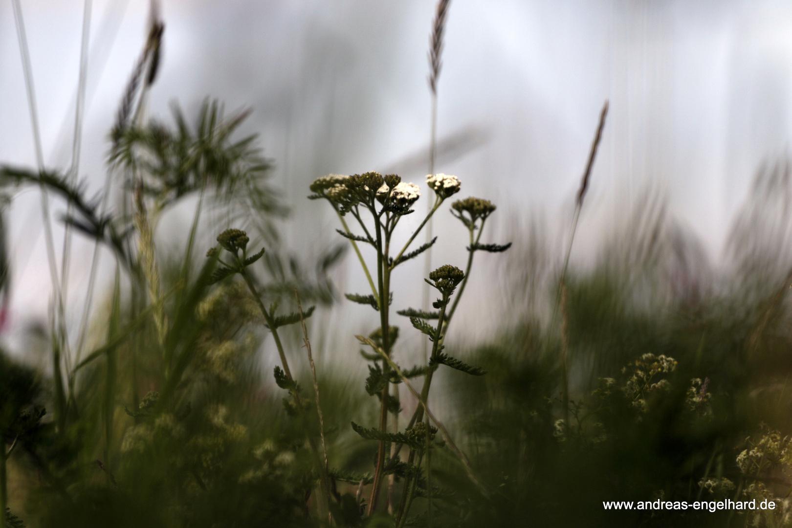 Blume2 Versuch
