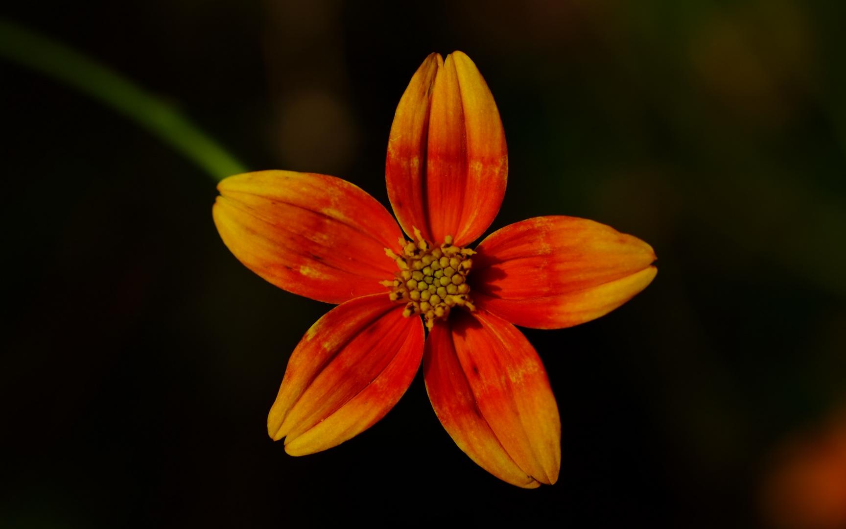 Blume9
