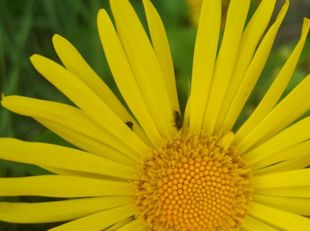 Blume&Käfer