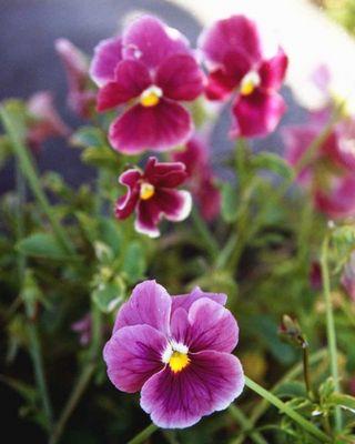 Blumen 04