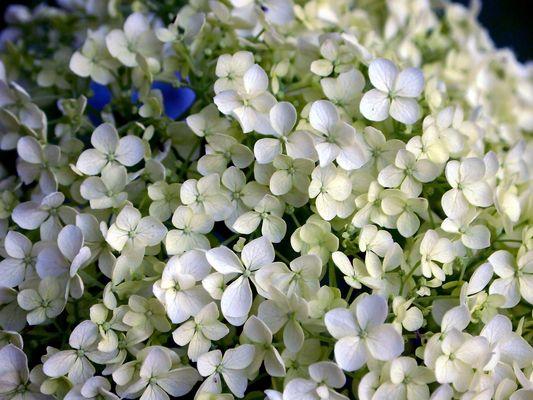 """""""Blumen..."""""""