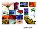 Blumen 2009