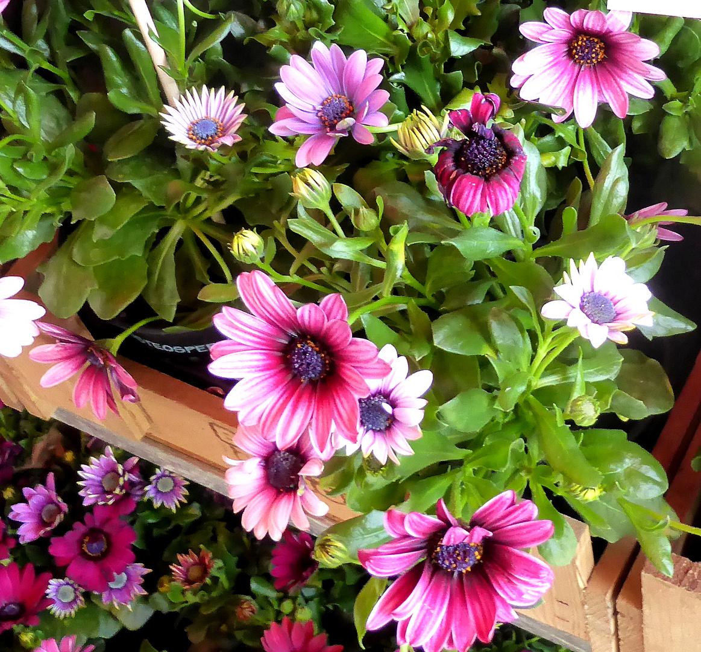 Blumen 2014