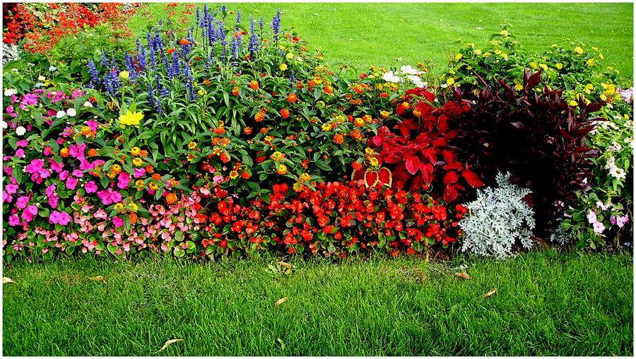 Blumen foto bild sonstiges naturkunst gestalten mit for Blumenrabatte gestalten