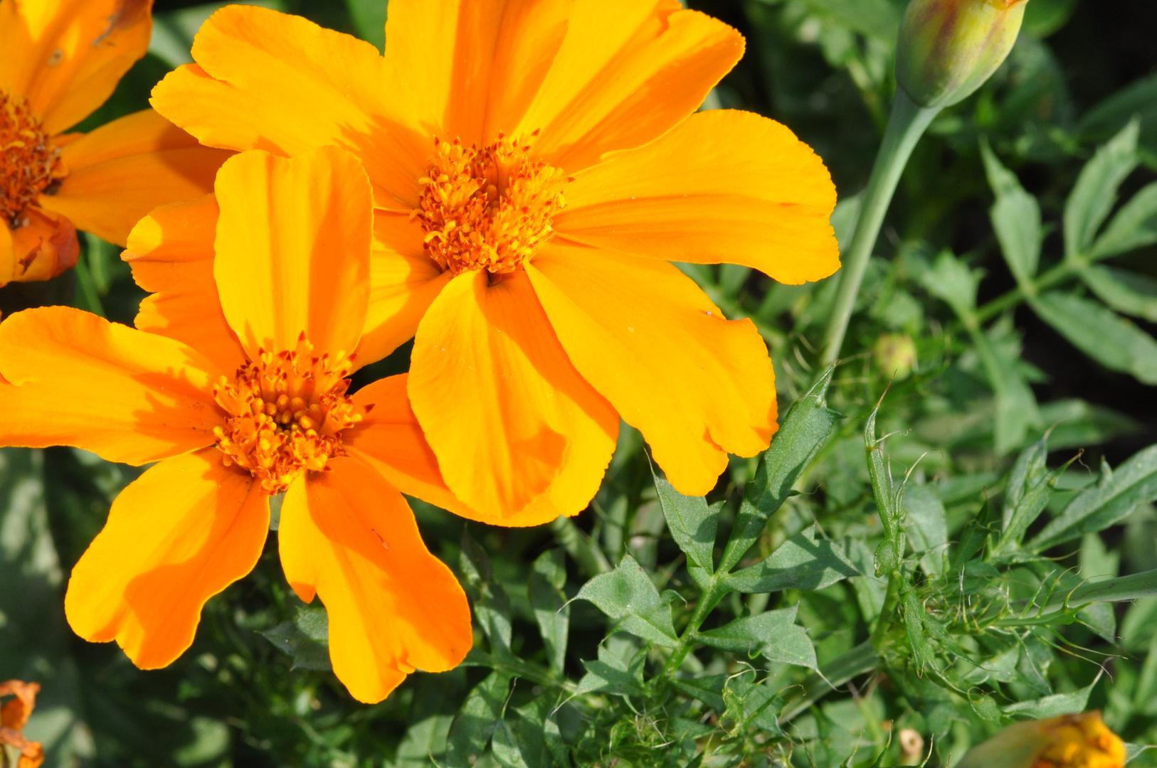Blumen 4