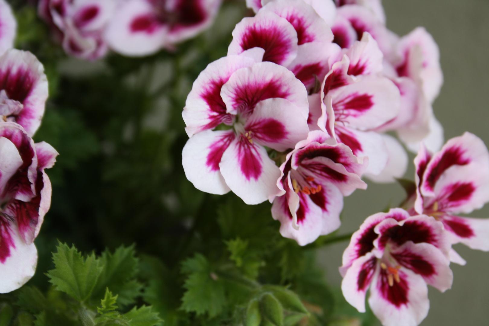 Blumen..